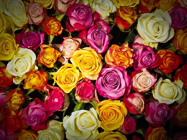 gula rosor står för