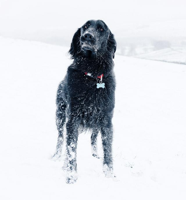 Vårda hundens torra tassar | Seniordeal.se